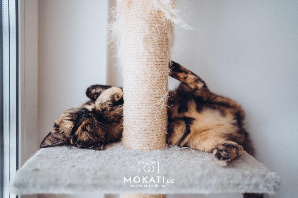 Missy, die kleine MOKATI Katze